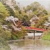 城に桜はよく似合う 2017 高岡城