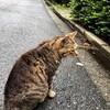 今日の景色 06/24 猫とカタツムリ
