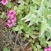 庭にはびこるイモカタバミを根絶させたい