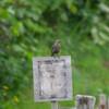 北海道の鳥