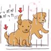 捨て犬ゼロ部を見た感想5