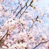 近所のファミレスでスポーツ総合雑誌「Number」を読んで考えたこと... |広島カープの美しい伝統文化。その美しい心が受け継がれていく