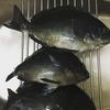 1月26日 城ヶ島釣行 高水温維持で期待