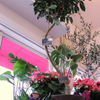 Foliage Plant ベルローズの観葉植物