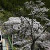 花咲く鳩ノ巣(その3)