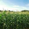 農地を相続したら知っておきたい、農地法のこと|農地法第3条とは?