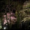 音更町で桜のライトアップがあるよ