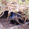 フィリップ島でペンギンパレードと自然を満喫!子供連れフィリップ島旅行③