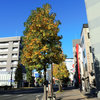 高崎駅前通り散歩 今朝は13℃・有明の月・モミジバフウ・浅間山