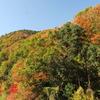 彩り豊かなふたつの季節~京都・八瀬の里山から~