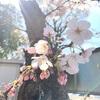 高知県のにわとりさんに会いに行った話