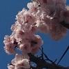 【手もみ処 爽やか】梅の花がきれいに咲いていますね