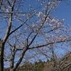 実りの郷納入と東金の桜