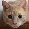 猫を長生きさせる方法・病気にならない秘訣!無添加フード?睡眠?ストレス?