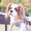 [犬散歩] 灘丸山公園 紅葉