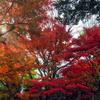 上野動物園の紅葉