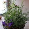 モネの庭季節の寄せ鉢【返礼品】