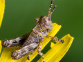 M.ZUIKO DIGITAL ED 60mm F2.8 Macroで昆虫を撮るのが大好き