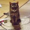 テリーの死-愛猫テリーの思い出5-
