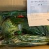 【ふるさと納税】6ヶ月定期便のお楽しみ「肥前の国のお野菜詰合せセット」