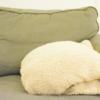 寒い冬にオススメ!お手頃価格で、超暖かいブランケット:HeatWarm(ヒートワーム)毛布