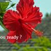 【夏フェス2017】ビーチフェス、楽園になるかは準備次第!?