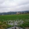 今日の田んぼ(゚∀゚)32