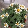 花もちの良さに驚き!