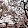 昭和記念公園の桜見てきた2019!【2】