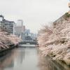 3月末の東京の桜