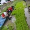 酒造りへの道 田植えは続く 長久手 無農薬米