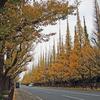 ※オリンピック道路が墓地下をくぐる /      千駄ヶ谷「仙寿院」のこと…五輪再開はあるのか