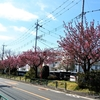 2020-4-10 八重桜並木
