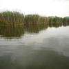 ブラックバス釣行記 西の湖 2012年6月3日