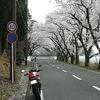 花見 in 琵琶湖(^^♪