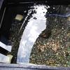メダカの水槽に溶岩石を入れる事をオススメする理由