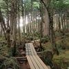 幻想的な苔と原生林が広がる佐久穂町「白駒の池」