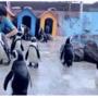 「相葉さーん!」と呼ぶと名前を聞き分けてやってくる!東北サファリパークの「嵐ペンギン」に癒やされる♡