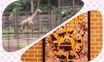 【20200701】上野動物園の予約&混雑状況の備忘録♥