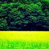 JR札沼線廃線跡に蝶の楽園を見た。(石狩郡当別町)