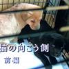 ザ・ノンフィクション「犬と猫の向こう側」前編