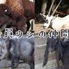 【動物プチ知識#3】ヒツジもヤギもウシ!?意外なウシの仲間たち