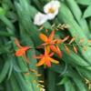 屋敷内の檜扇水仙も咲き始め‥‥‥