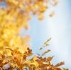 愛の詩~募る恋心と秋の空~