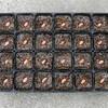 ジャンボ落花生の種蒔き