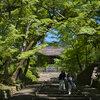 京都に青もみじを撮りに行きました -毘沙門堂編-