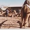 毎日更新 1983年 バックトゥザ 昭和58年8月2日 オーストラリア一周 バイク旅 39日目 22歳 天長地久 毛布購入 ヤマハXS250  ワーキングホリデー ワーホリ  タイムスリップブログ シンクロ 終活