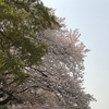 育休83日目  お花見4