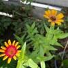 3つ目の開花🌸