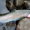 北海道 滝上町 渚滑川の釣り 20200621 / 滝上まで来て良かった